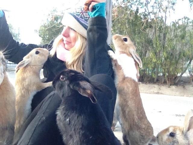 Rabbit Island Japan Life After The Okunoshima Ferry