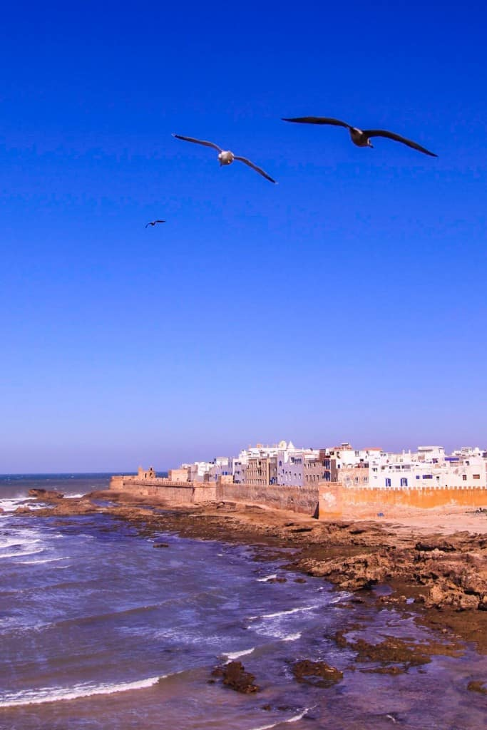 Seagulls flying over Essaouira