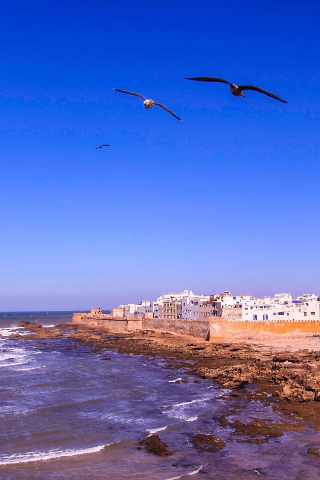 Seagulls flying over Essaouira
