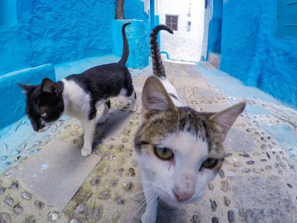 Shady Cats in Morocco