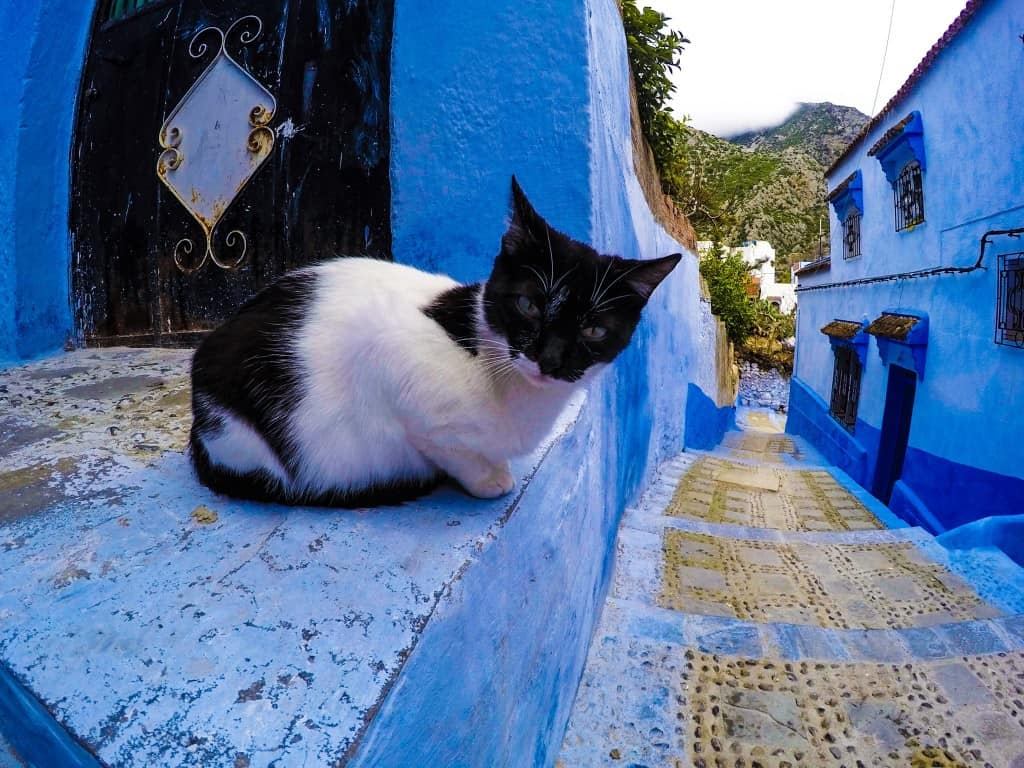Kitties of Chefchaouen