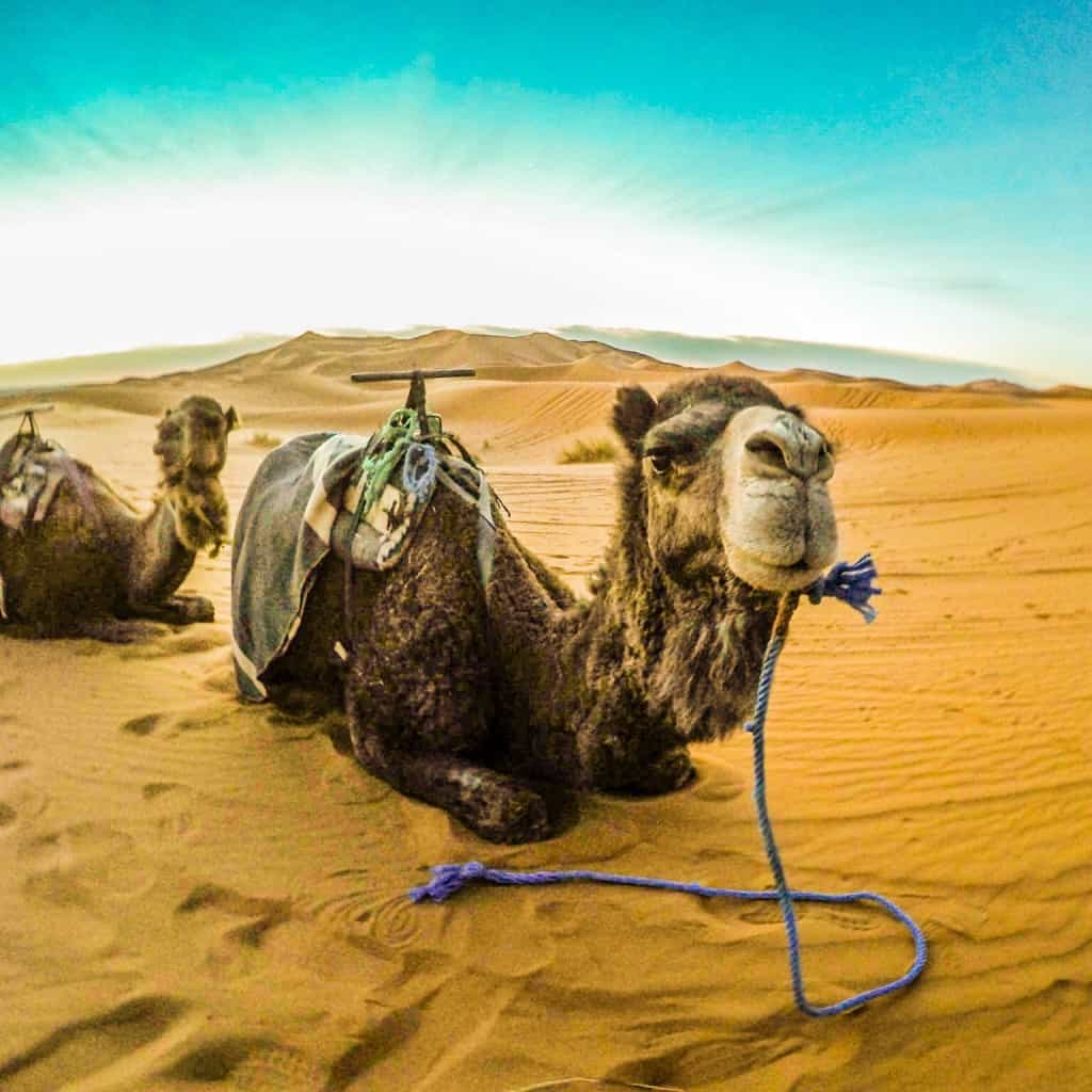 Best Travel GoPro Photo Camel