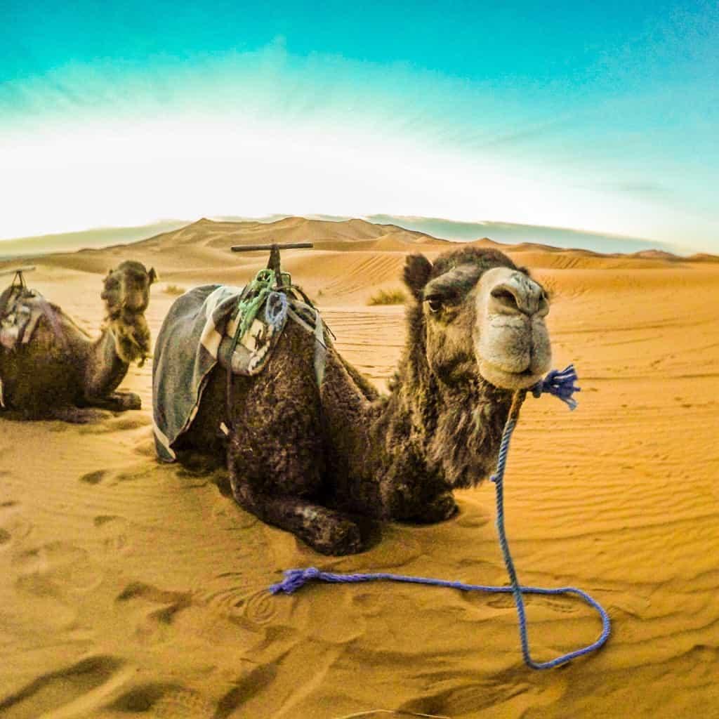 Best Travel GoPro Photo Camel