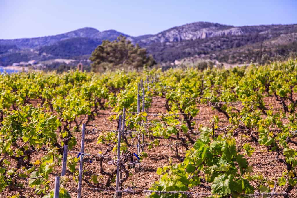 Vineyard Hvar