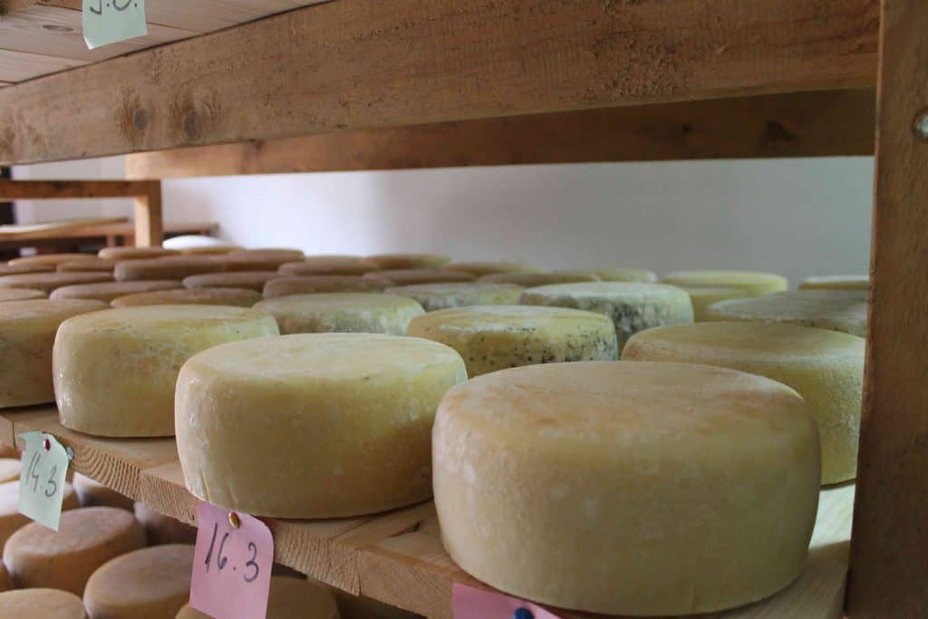 where to go in croatia? Try Pag Cheese