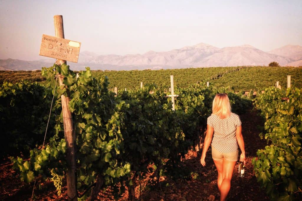 Tasha In Vineyard