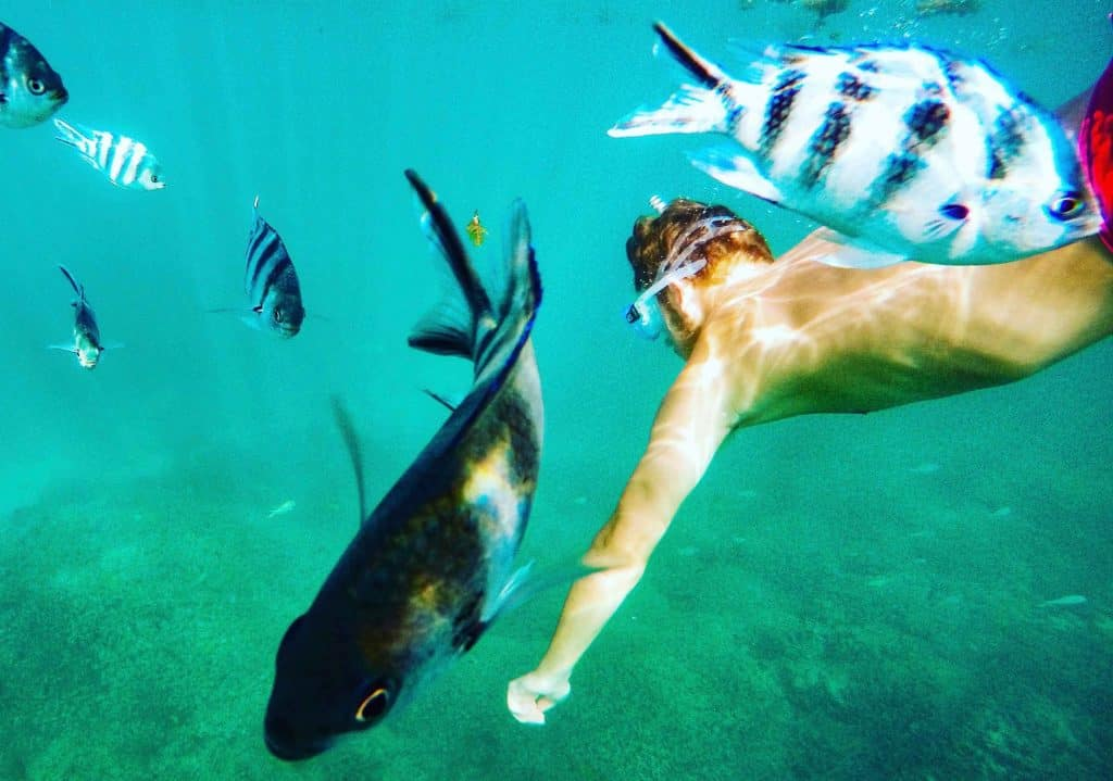 Snorkeling in The Seychelles