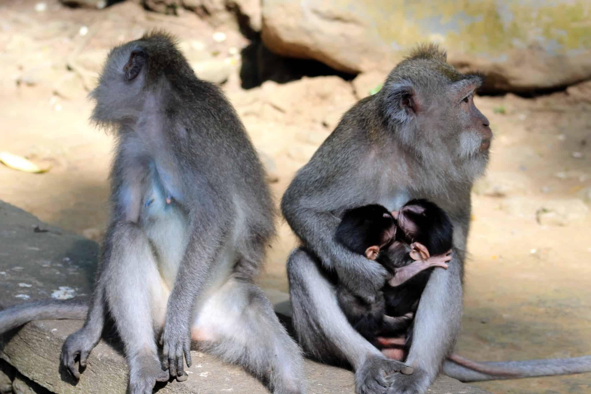 Monkey Forest in Ubud