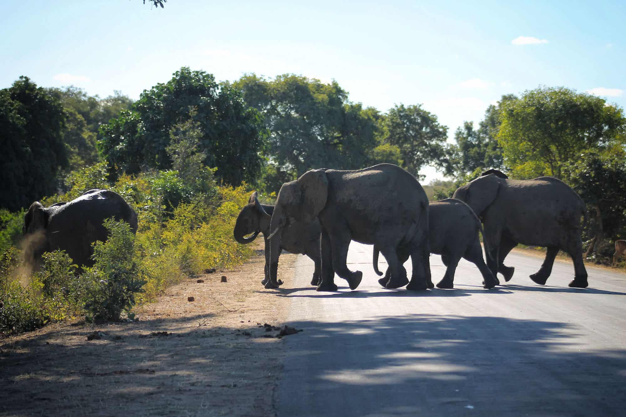 Kruger National Park Must See in South Africa