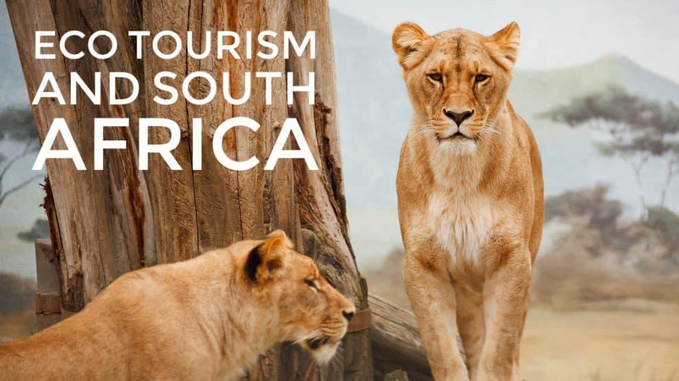 Ecotourism at Gondwana Game Reserve
