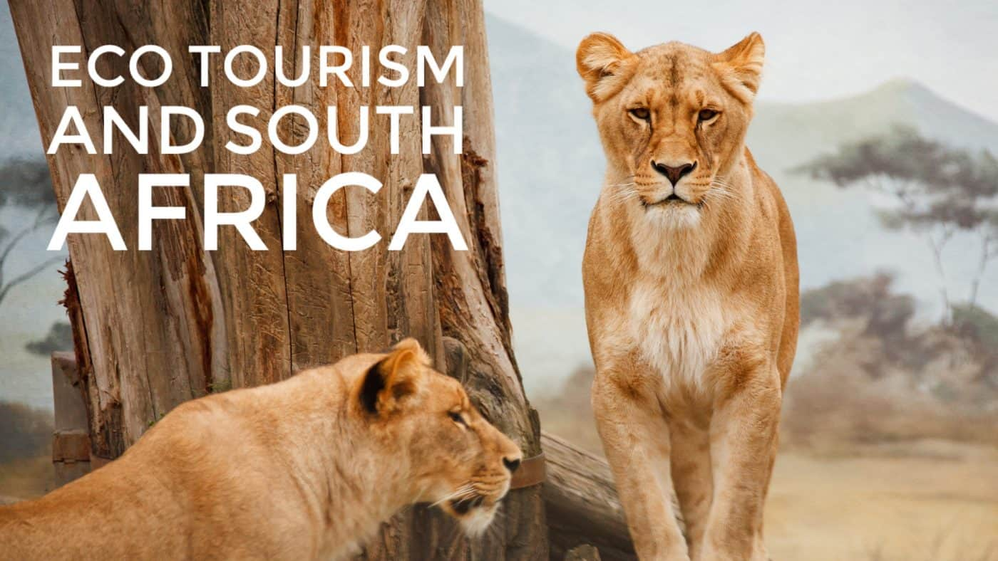 Ecotourism at Gondwana Game Reserve