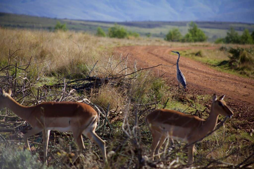 Birding at Gondwana