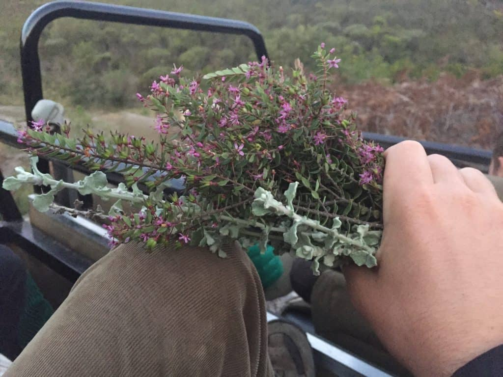 The Fynbos in the Western Cape