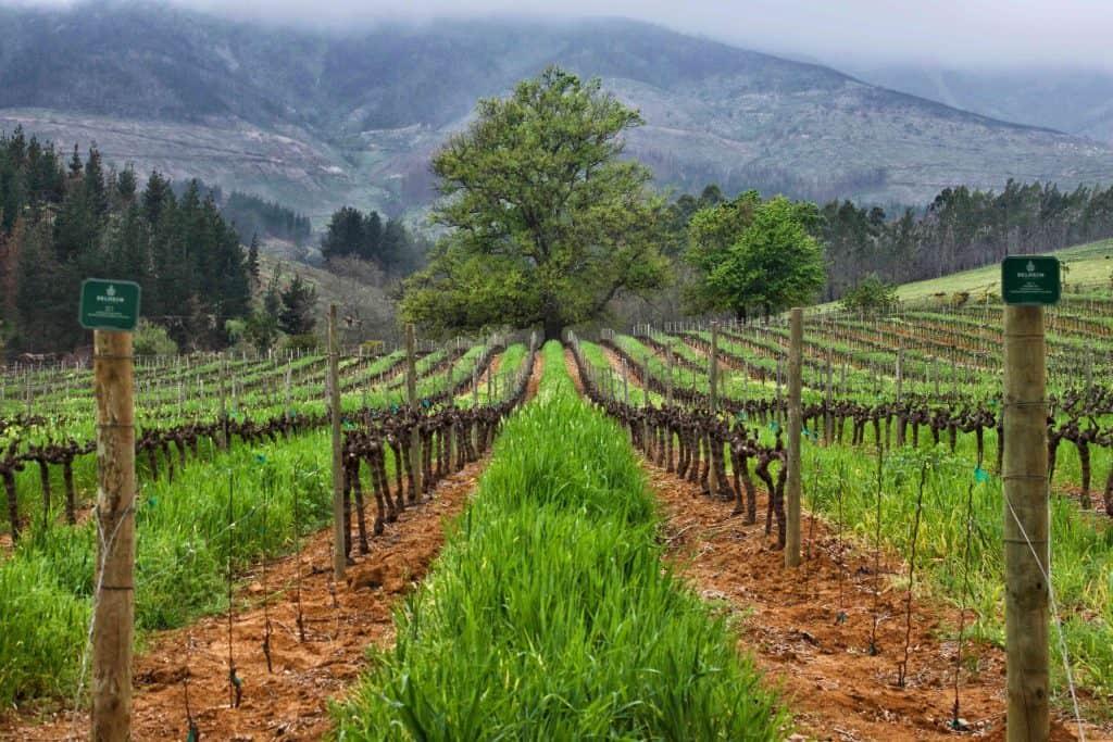 Delheim: best wine regions in the world