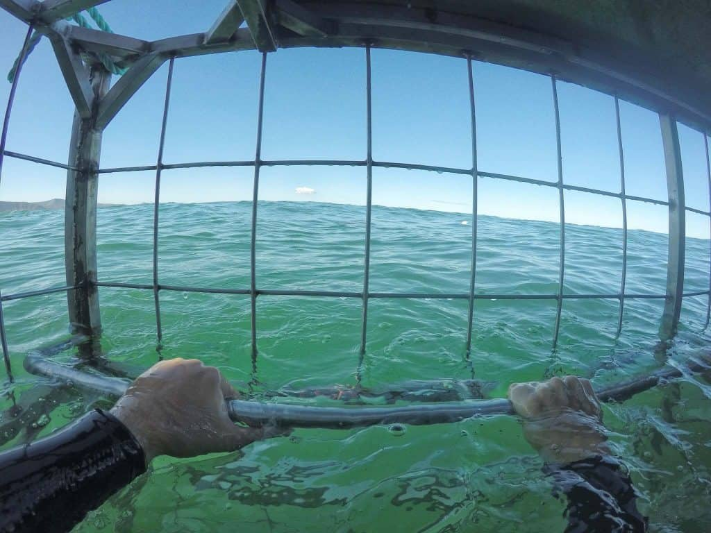 Shark Cage Diving Must See Places in South Africa