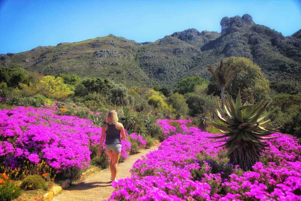 Romantic things to do in Cape Town - Stroll through the Gardens