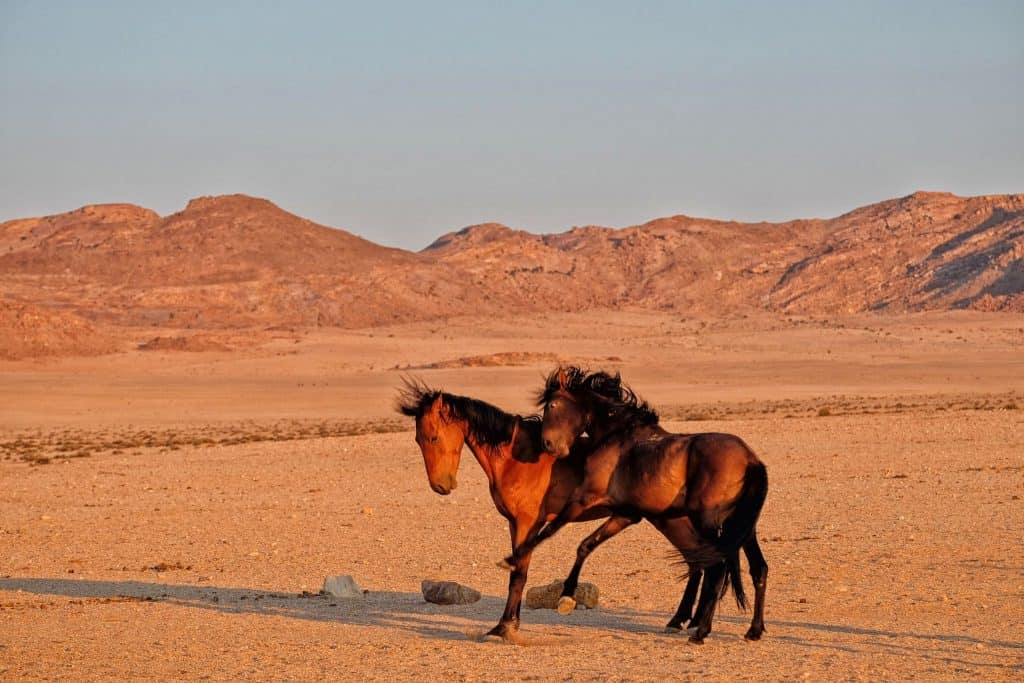 horses-in-namibia