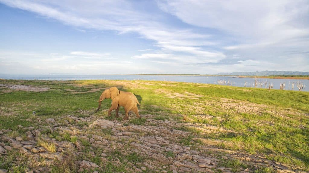 Lake Kariba Elephant