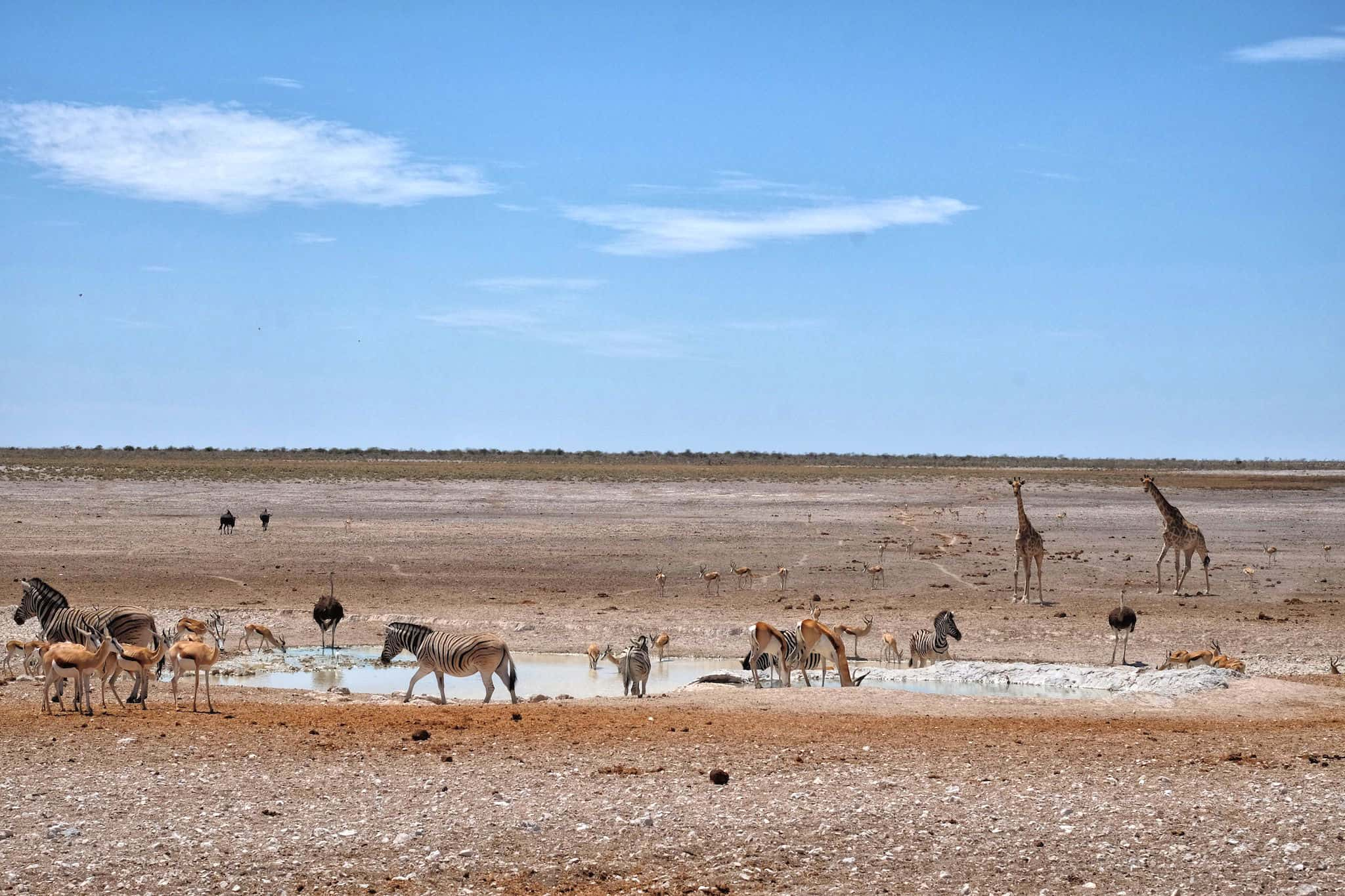 Etosha National Park Watering Hole