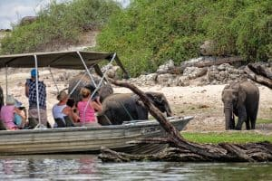 Boat safaris get up close in the Chobe National Park