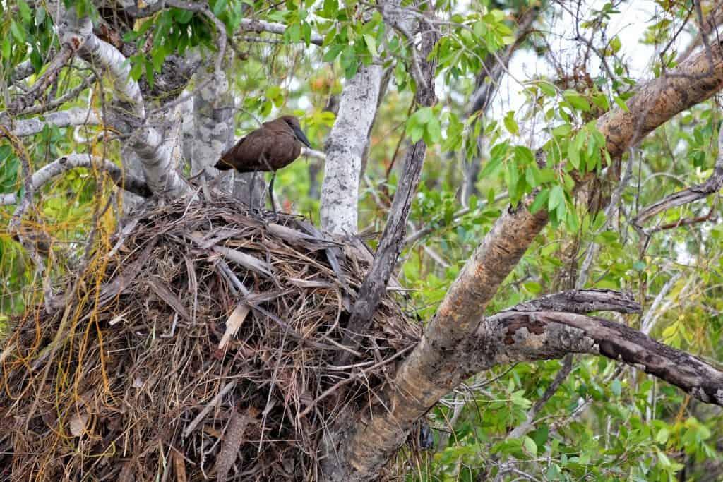 Birds of Zimbabwe