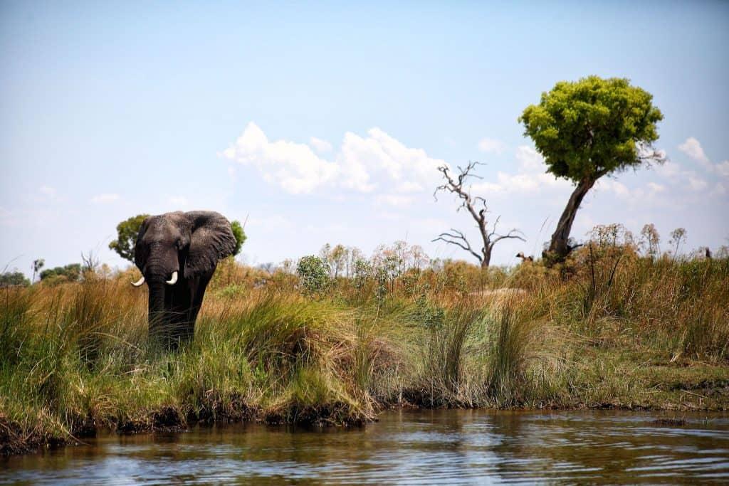 elephant-dead-tree-delta