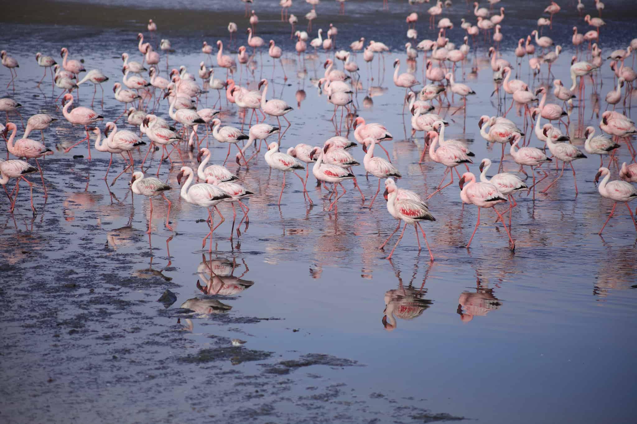 Namibia Road Trip - Walvis Bay