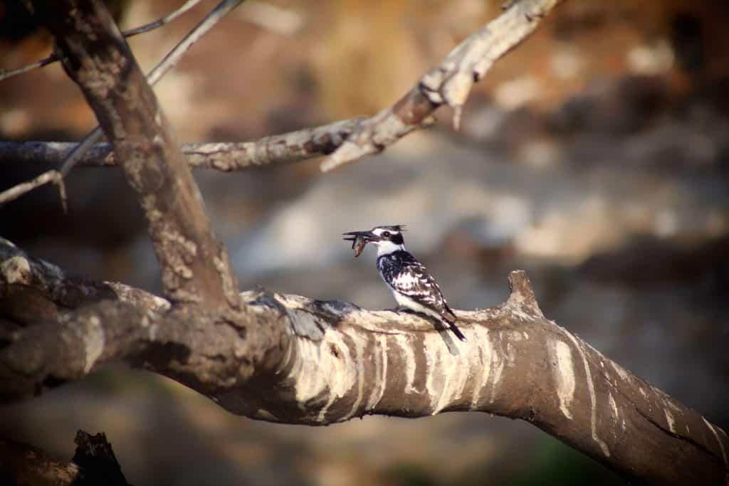 Birding First Safari