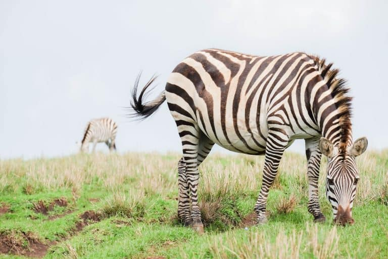 African Safari Tips for First Timers