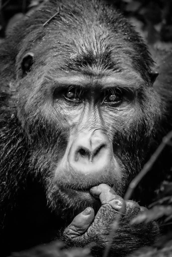 When to go Gorilla trekking