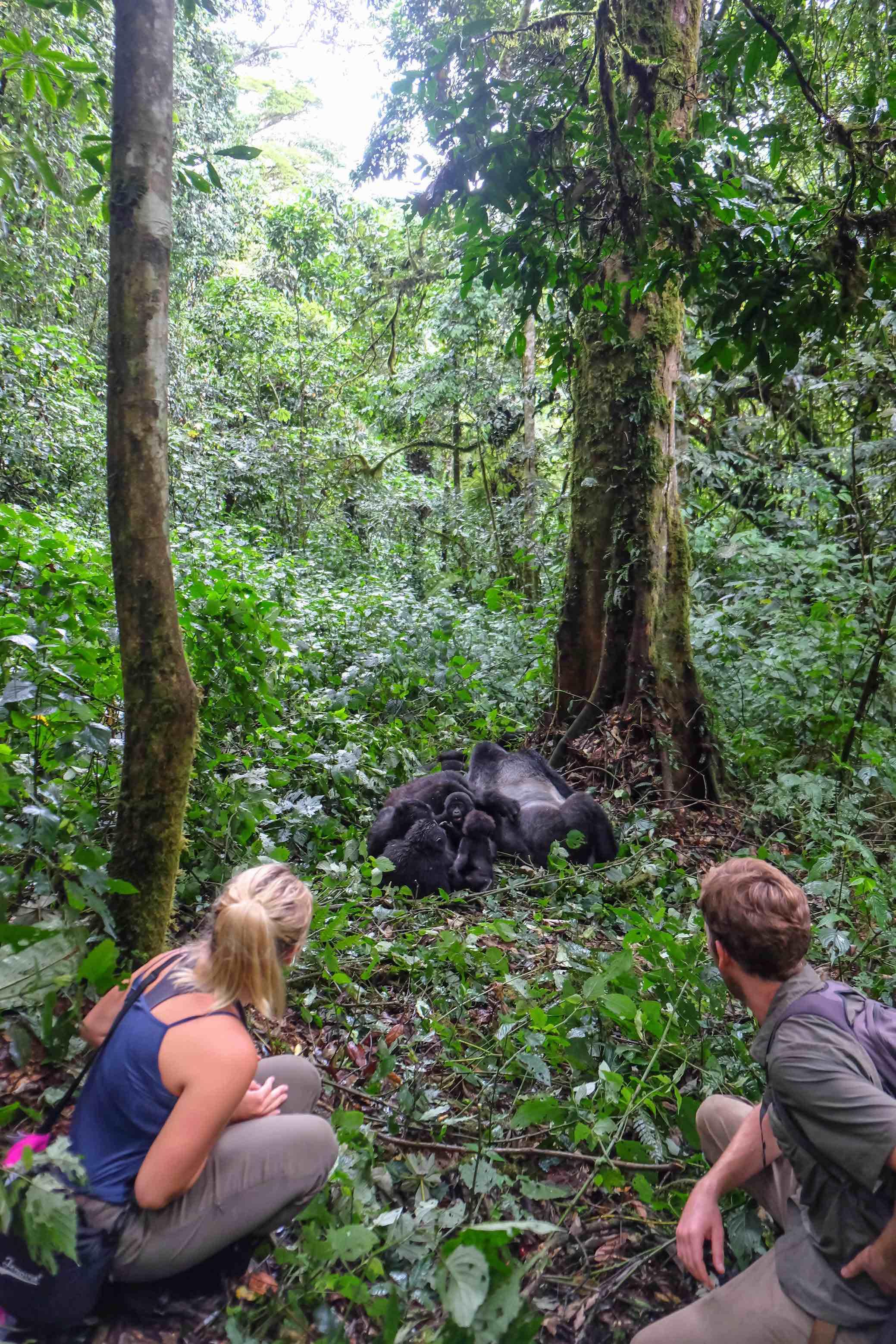 The World Pursuit seeing gorillas!