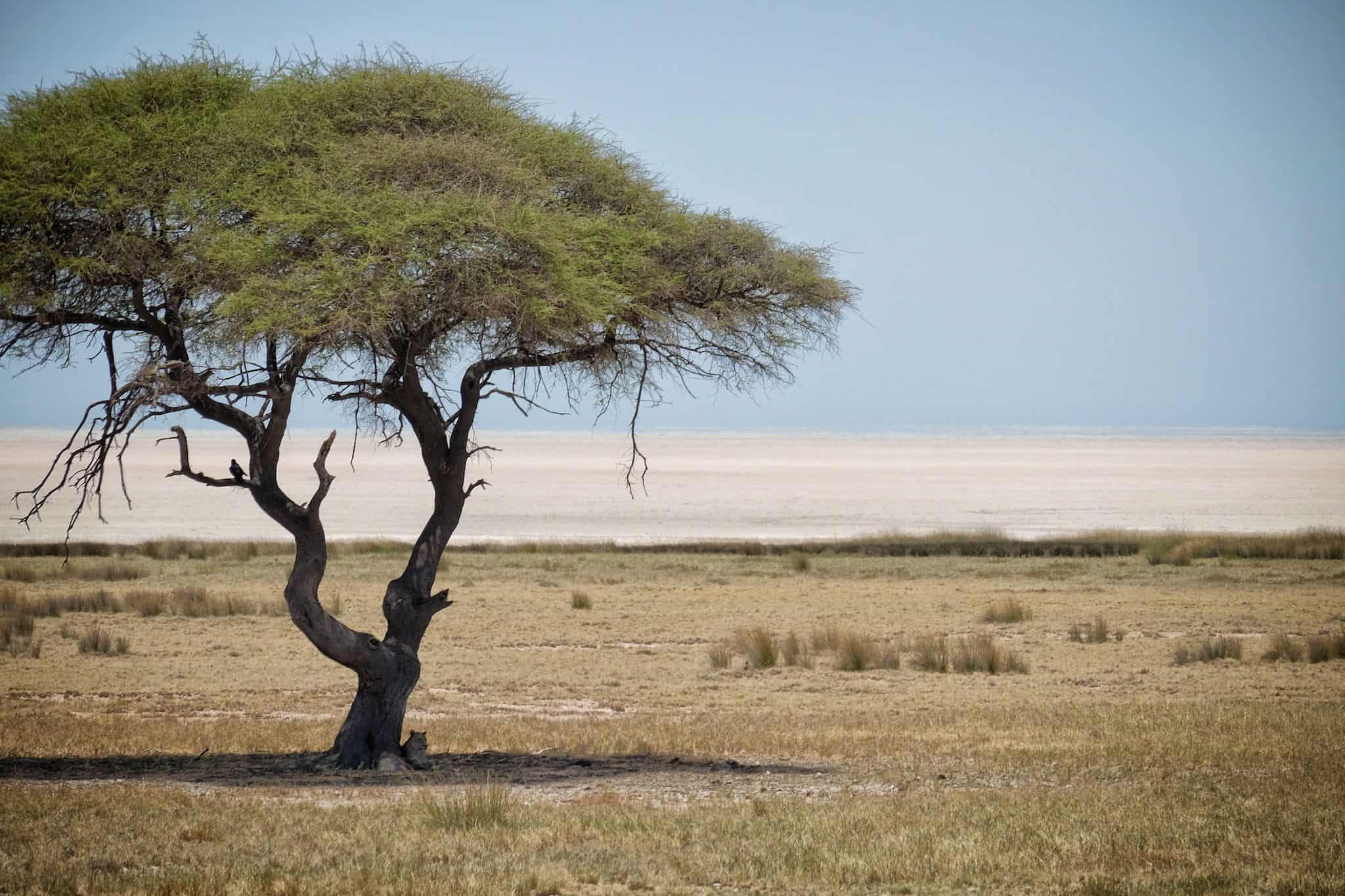 Etosha National Park Lion Sleeping