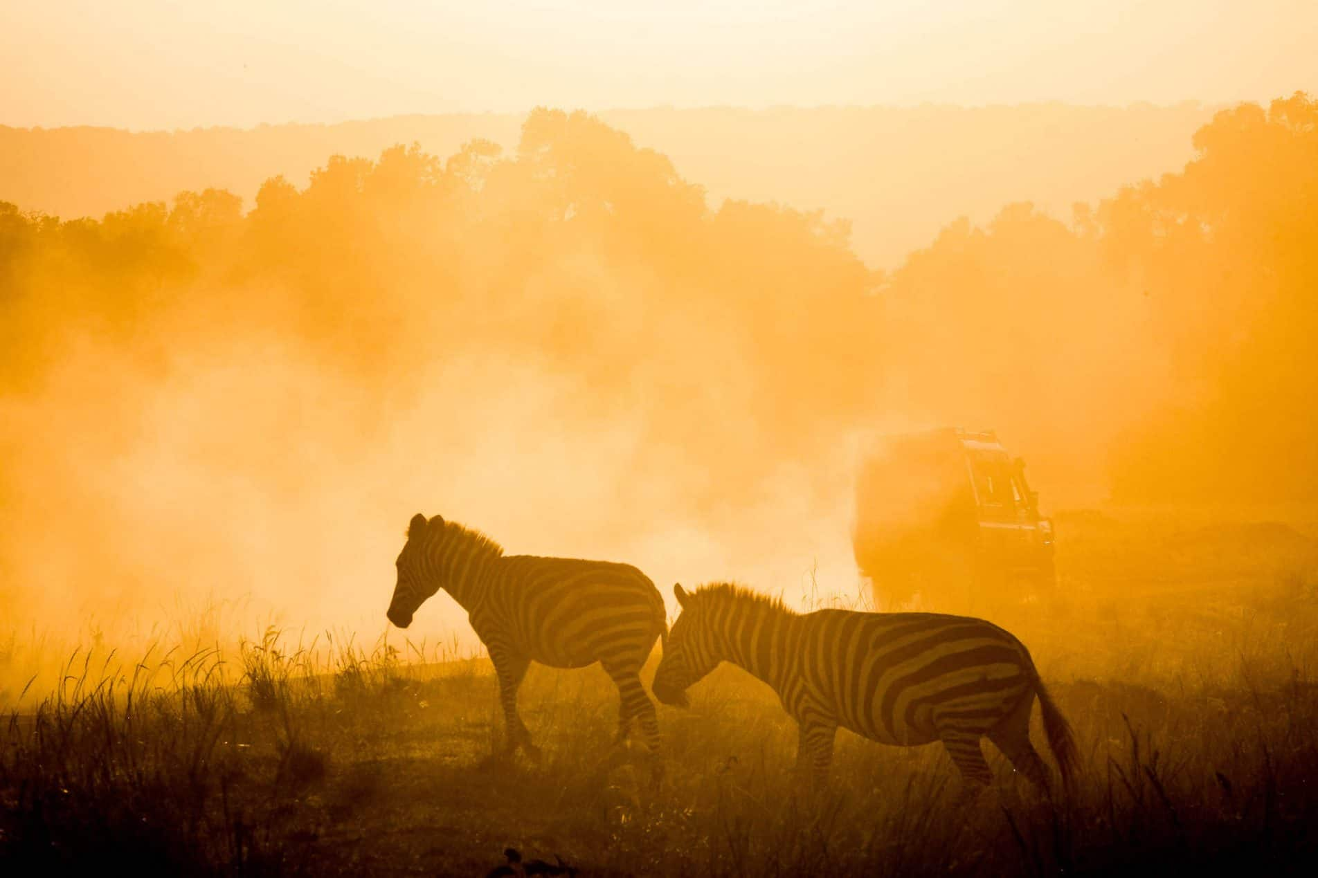 Best Camera For Safari Dust Zebra