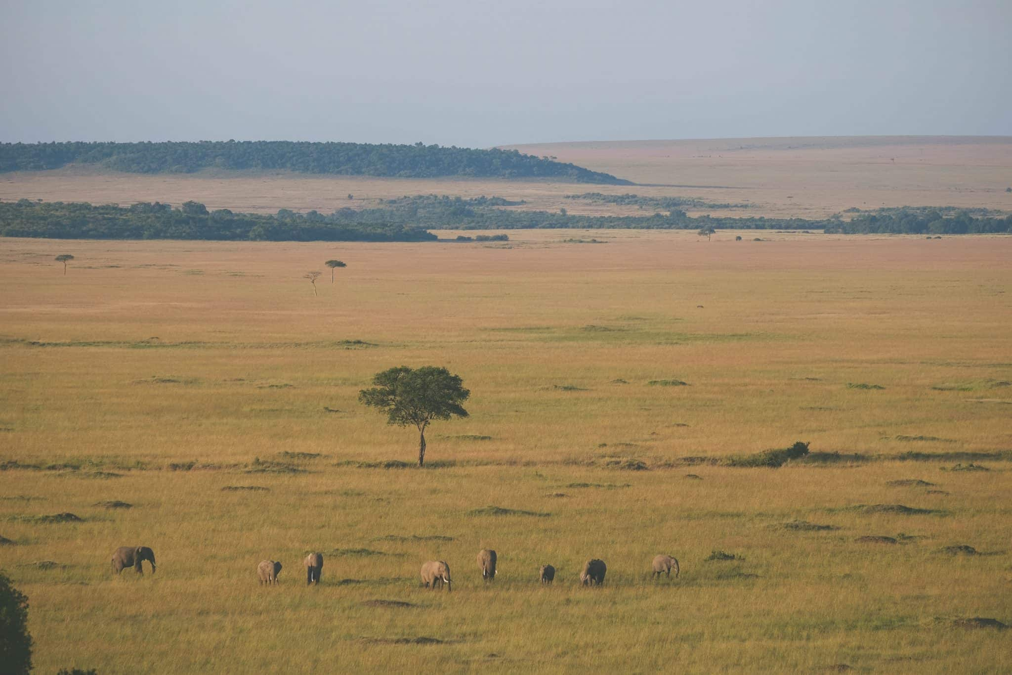 Over the Masai Mara