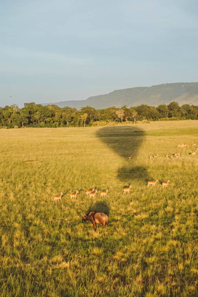 African Balloon Safari