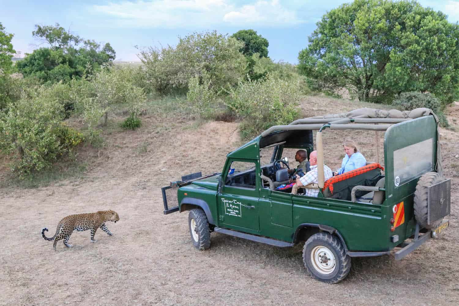 Governors Camp Leopard