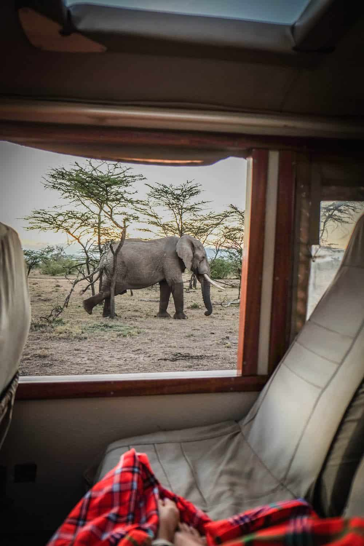 Ol Seki Elephant Masai Mara