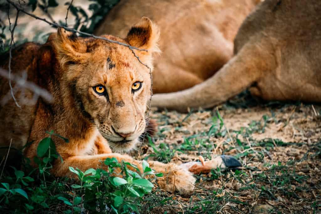 Africa's Wildlife