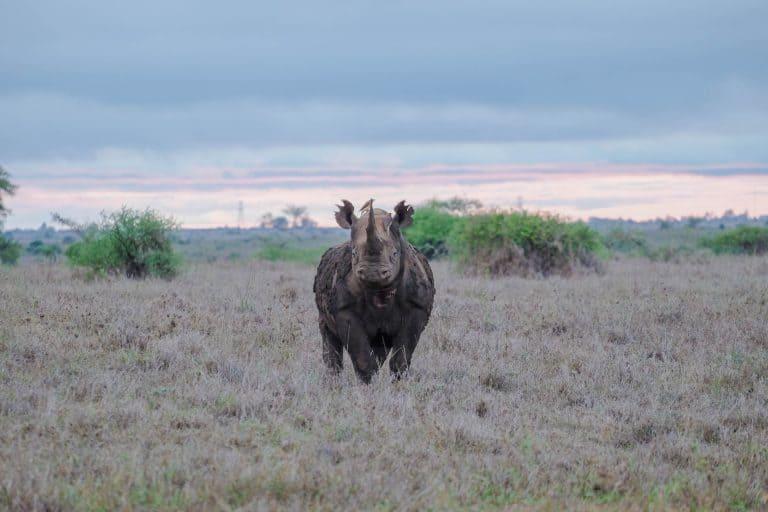 Nairobi National Park Rhino