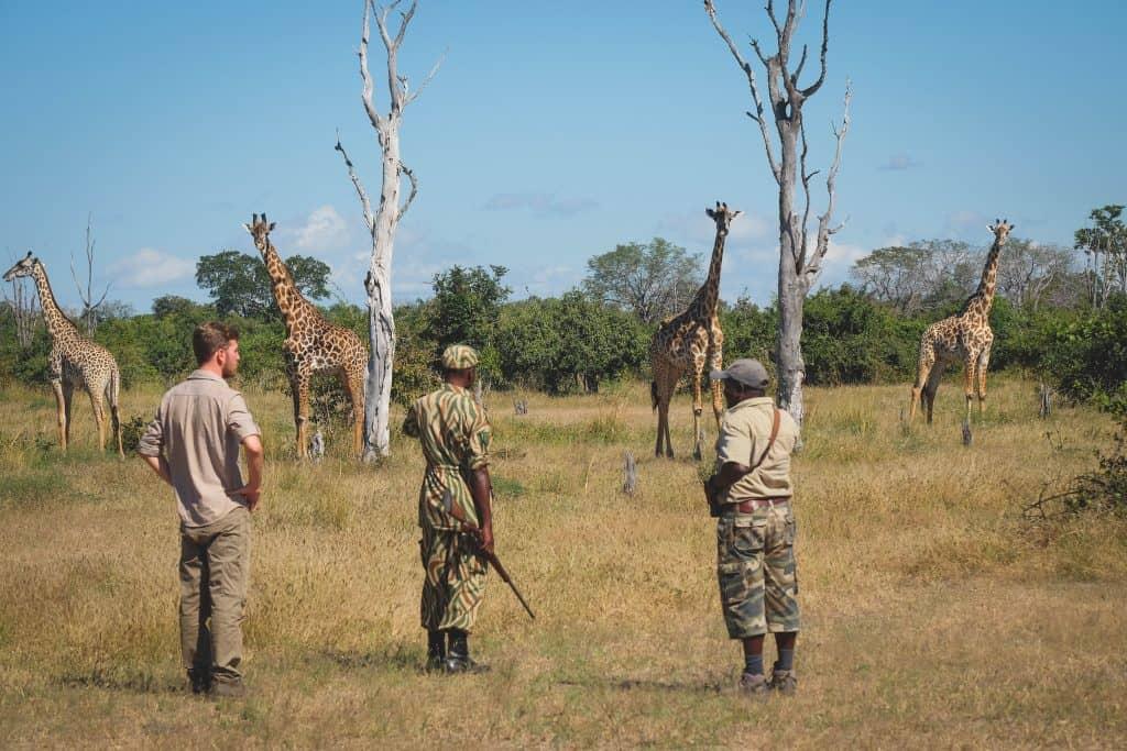 South Luangwa Bush Walk Giraffe