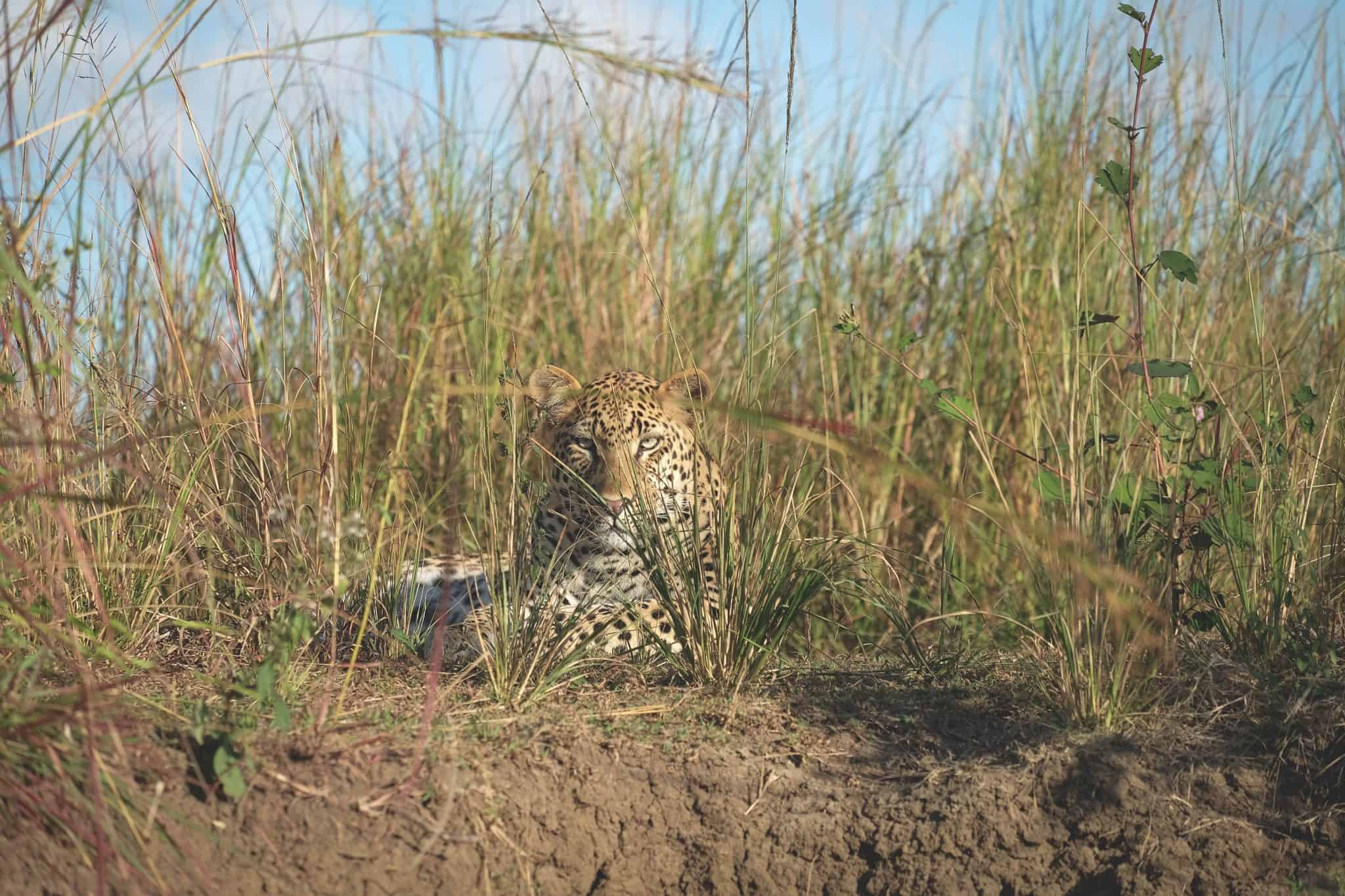 Leopard On Bank Of Kafue River