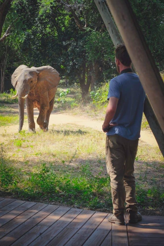 Cameron Mana Pools Elephant