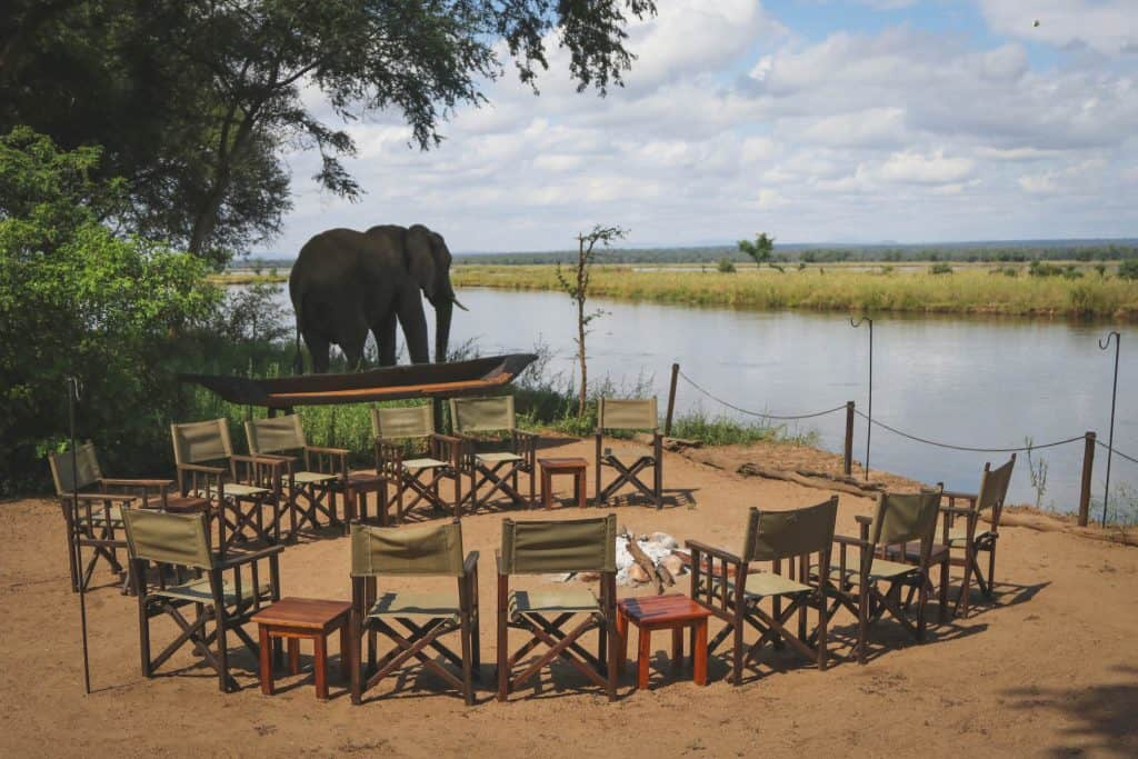 Elephants inZambia