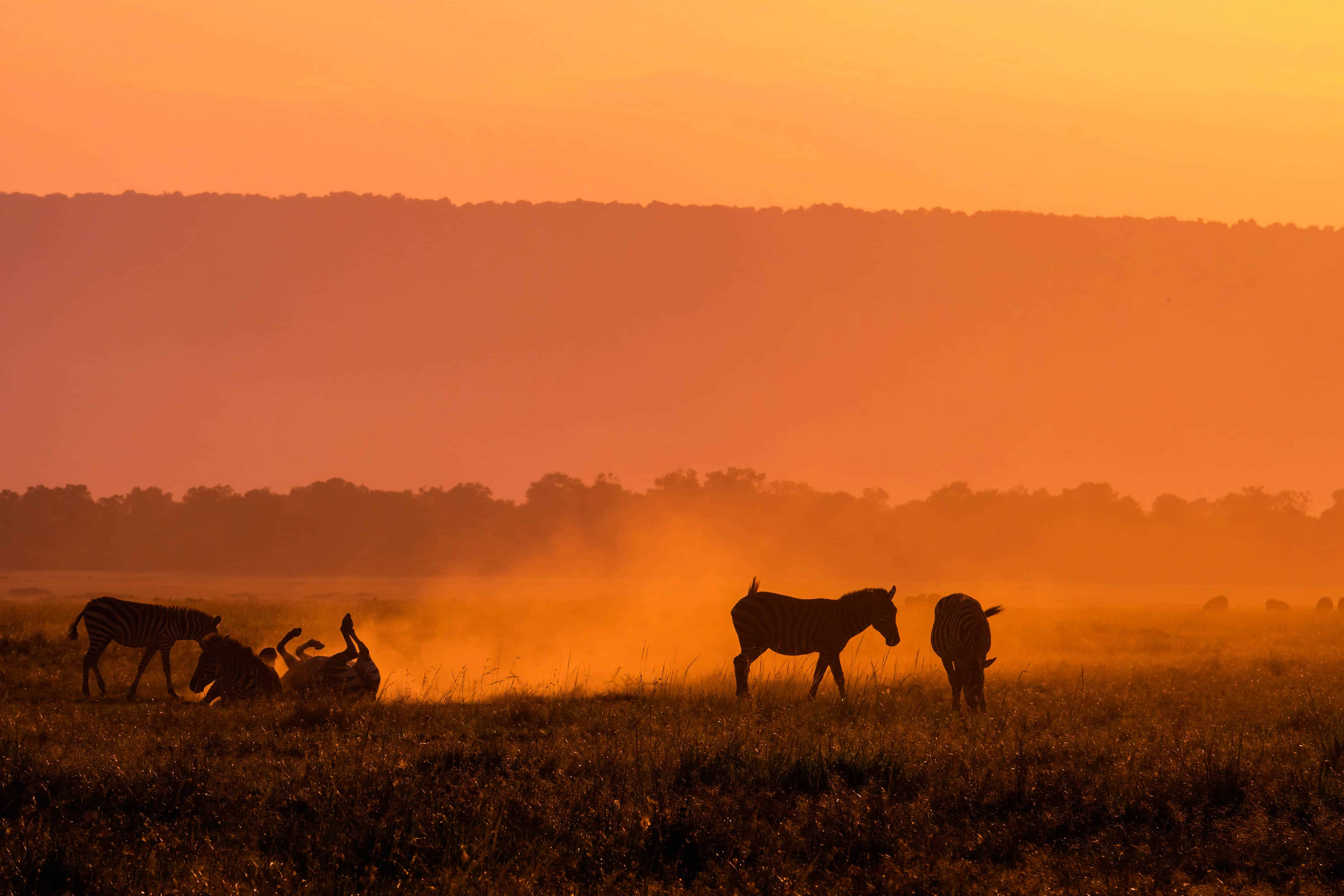 How to Plan a Safari in Africa • A Step by Step Guide