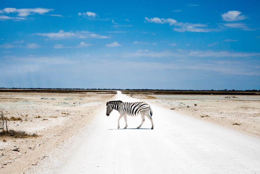 on safari in Namibia