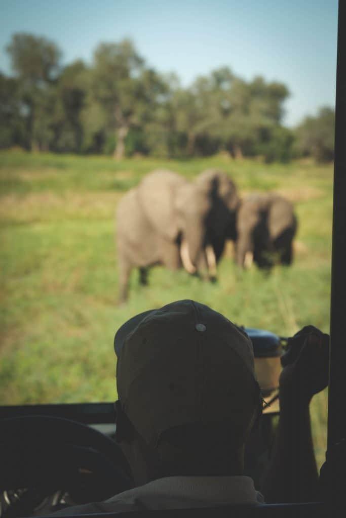 Safaris in South Luangwa