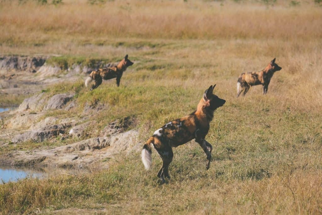 Hwange National Park 1