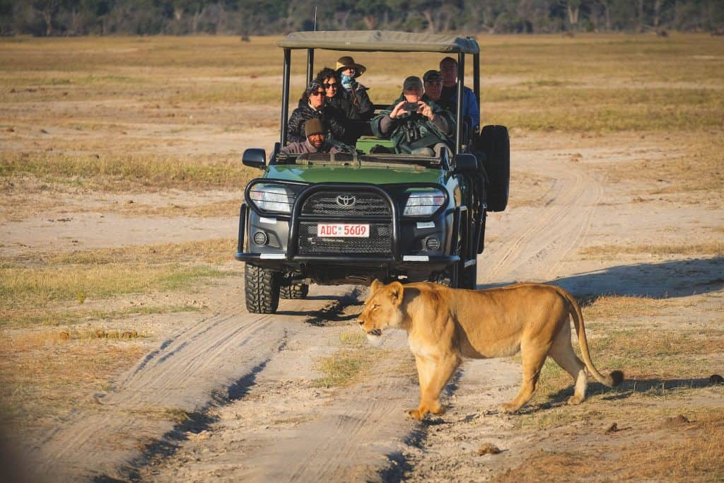 Lions in Hwange