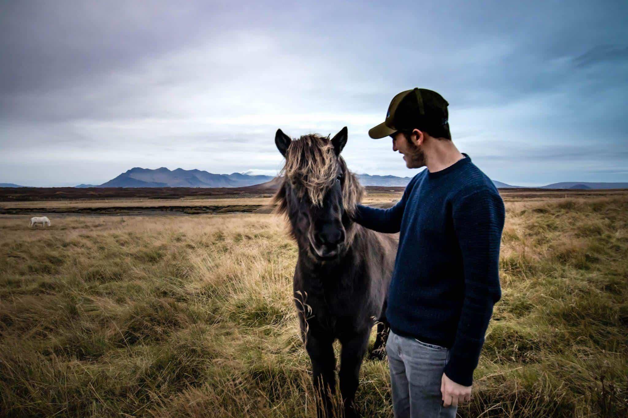 Best Time to visit Iceland - Horses in Iceland