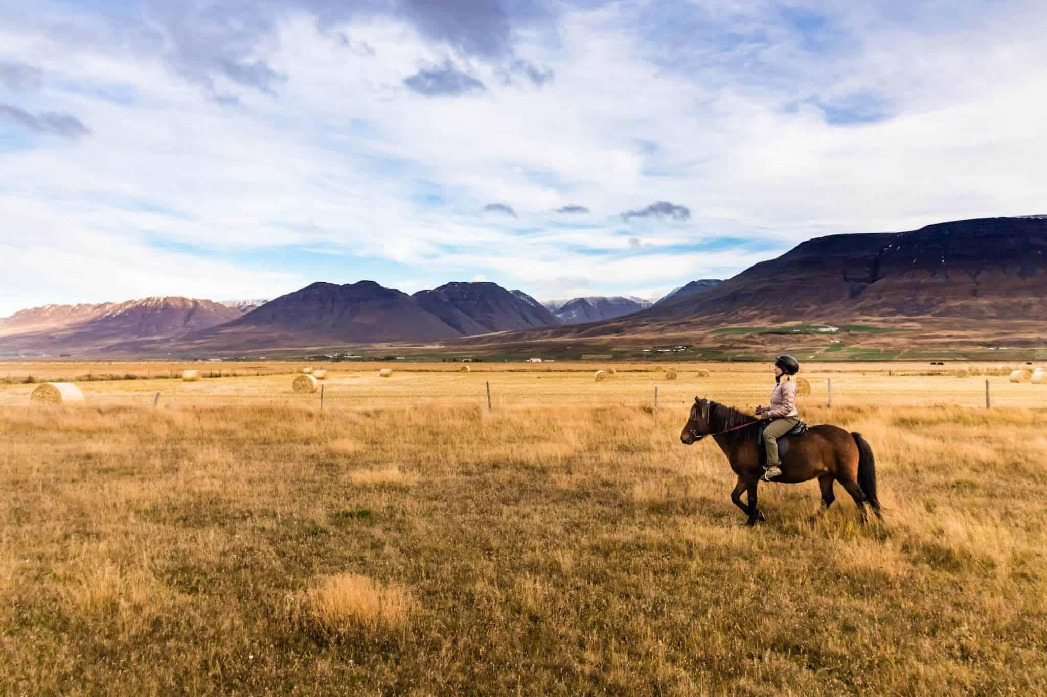 Driving in Iceland Horseback Camper Van